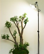 Enticing Grow Lights For Indoor Plants