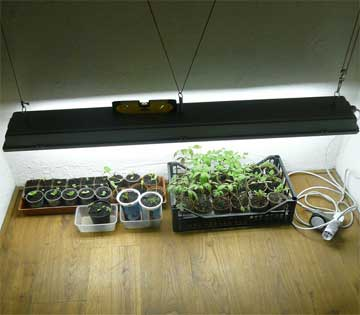 Medium Led Growing Lights